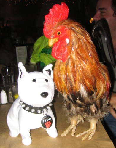 Fido and the Rooster
